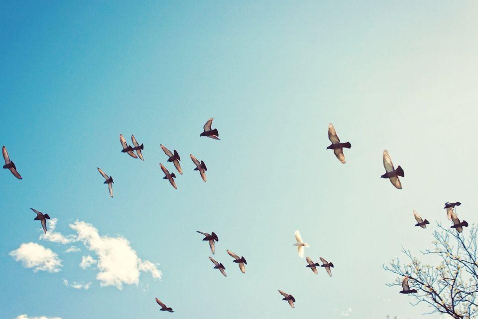 Flock Of Birds In Sky