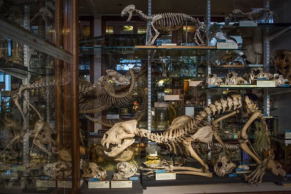The Grant Museum Undertake Conservation Work On Historic Taxidermy Collection