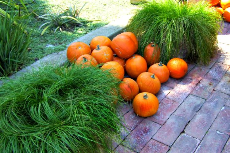 grasses and pumpkins