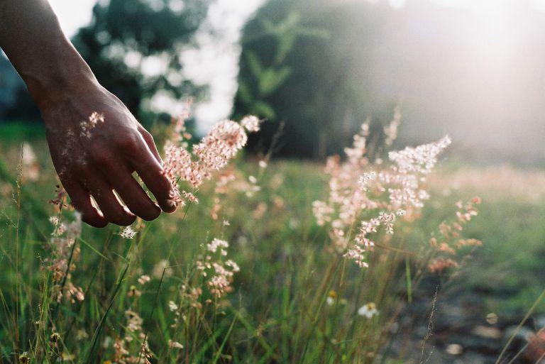 Hand Touching Wild Grass