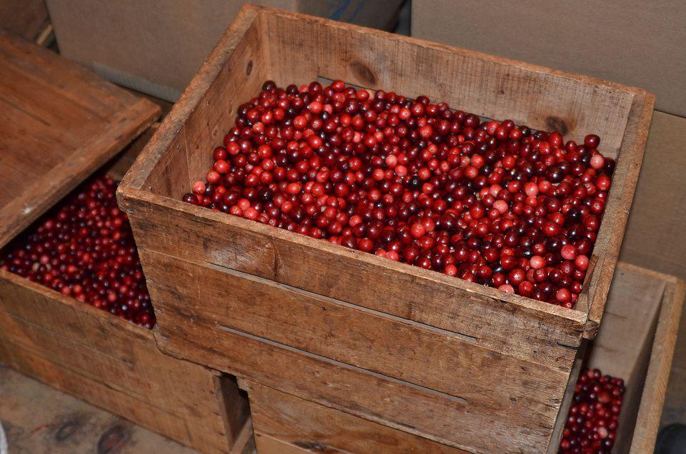 Fresh New England Cranberries