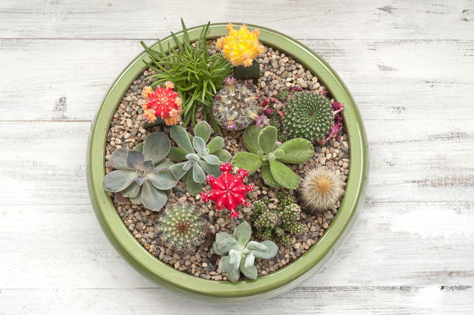 DIY outdoor decor ideas - succulent planter