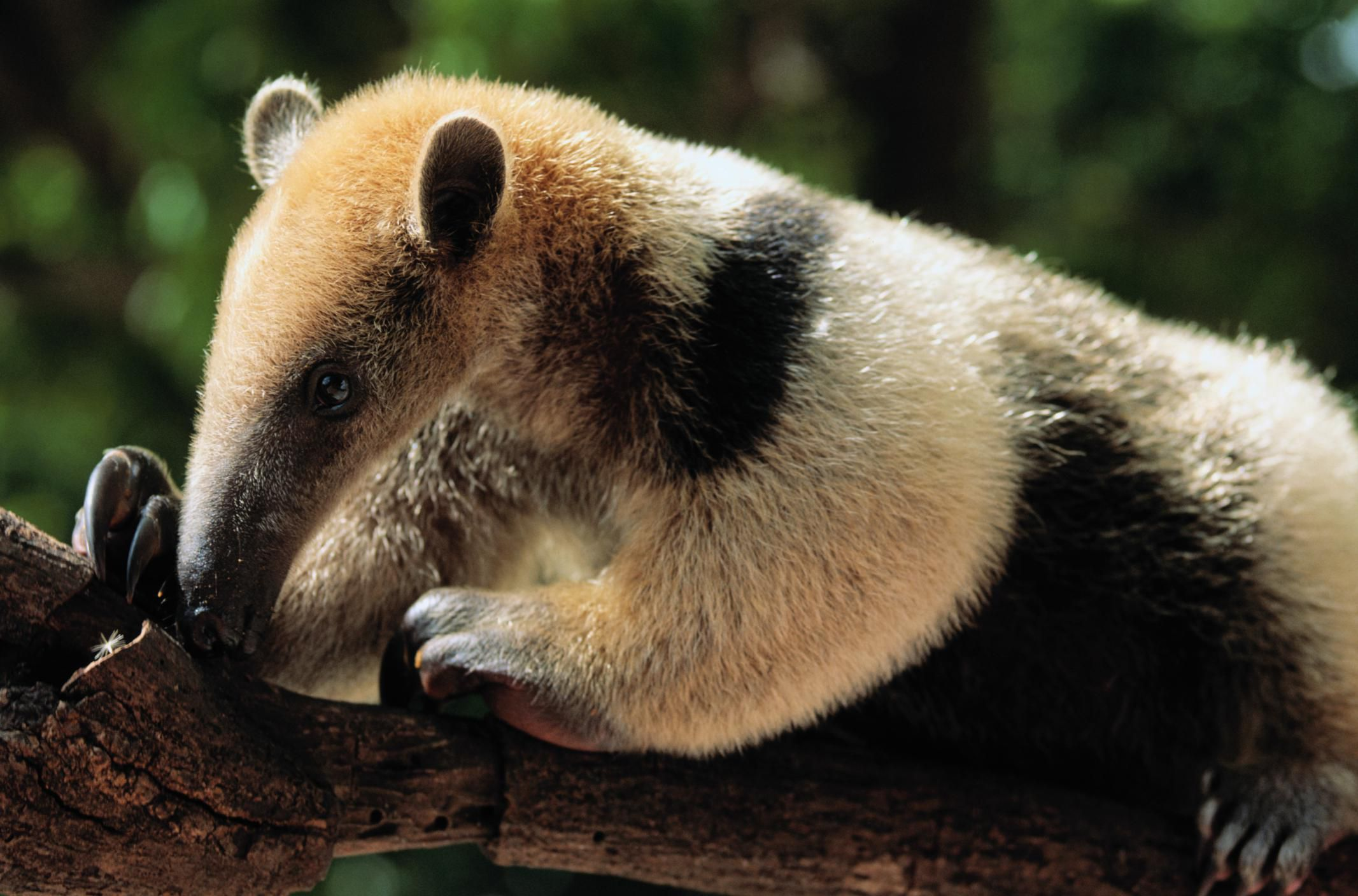 Exotic Pet Names that Start With N and O