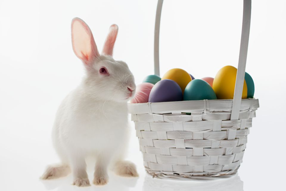 Rabbit and basket of eggs