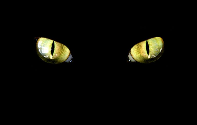 Cats can see in dim light, but not truly in the dark.