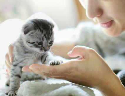 Socializing Older Cat With New Kitten