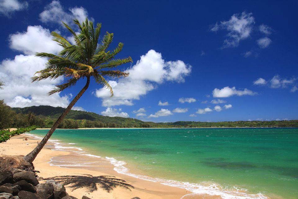 Driving tour of kauais north shore kauai hawaii pacific ocean palm tree beach scenic solutioingenieria Image collections