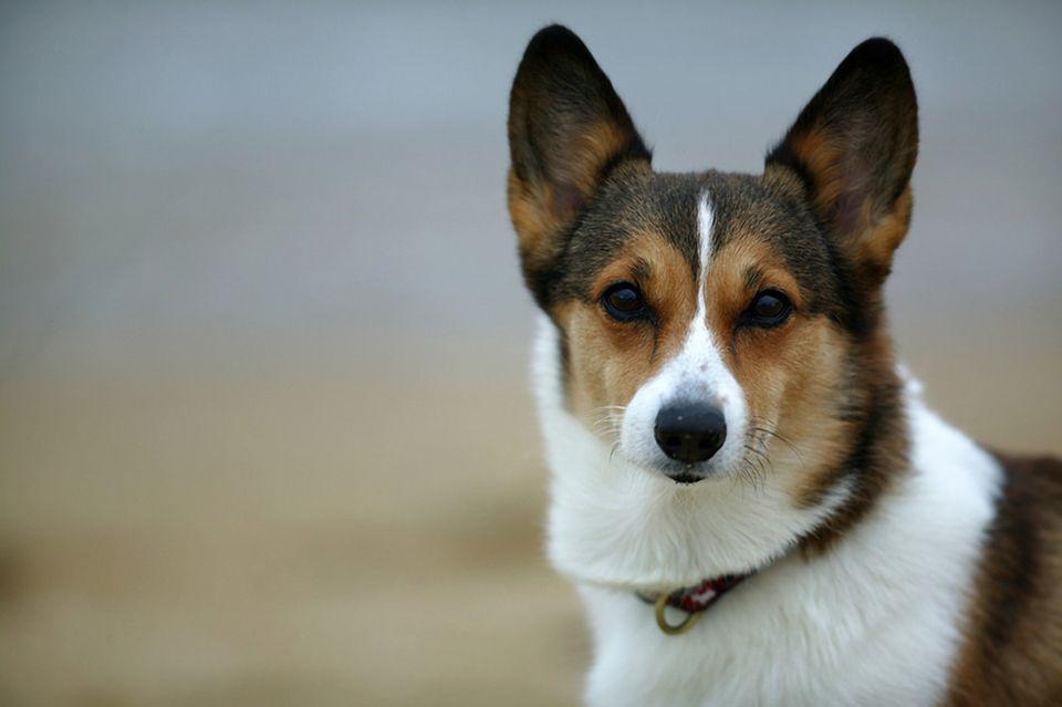 A dog at the Beach