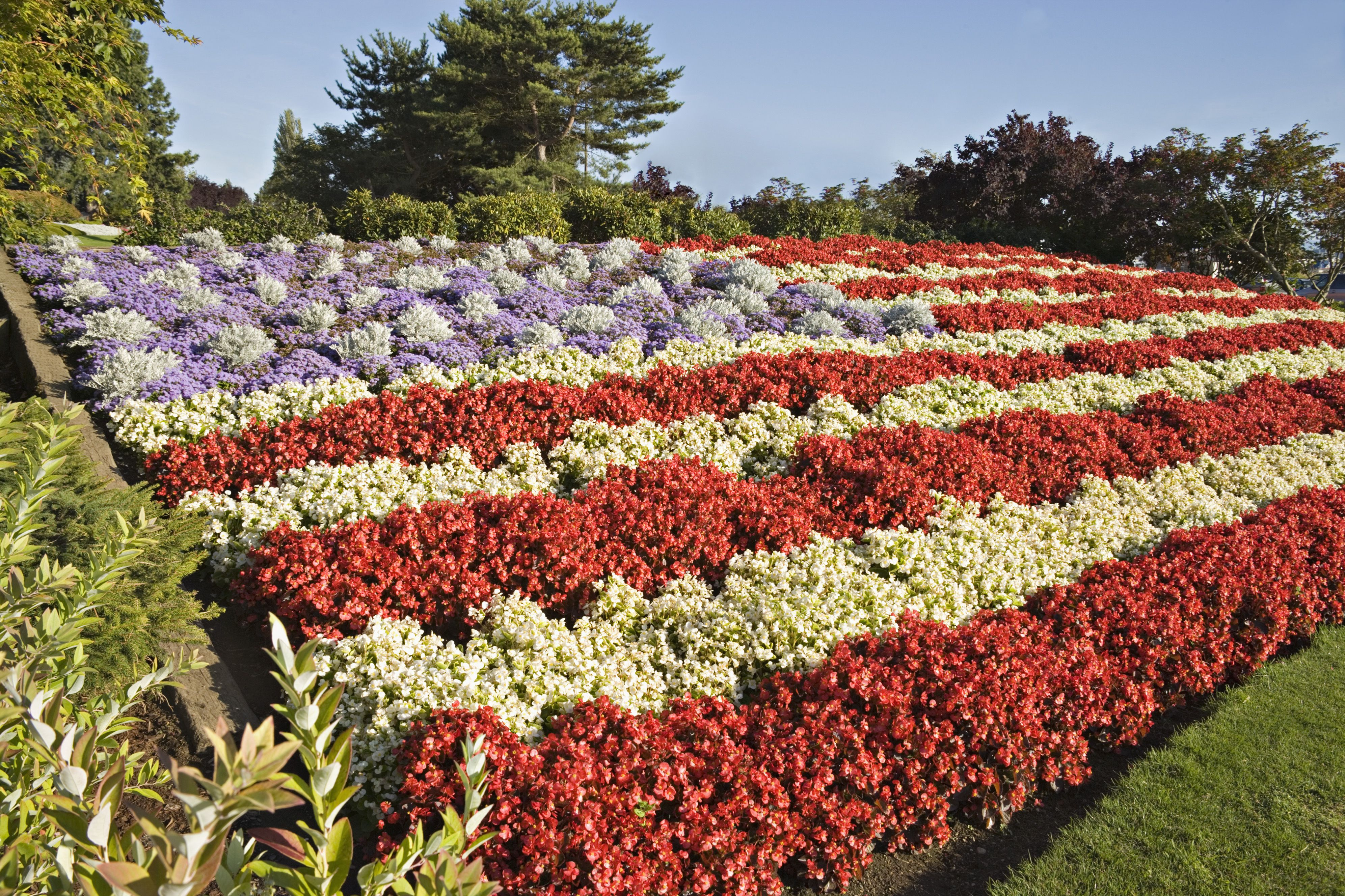 Red White And Blue Flowers For July 4th Plantings