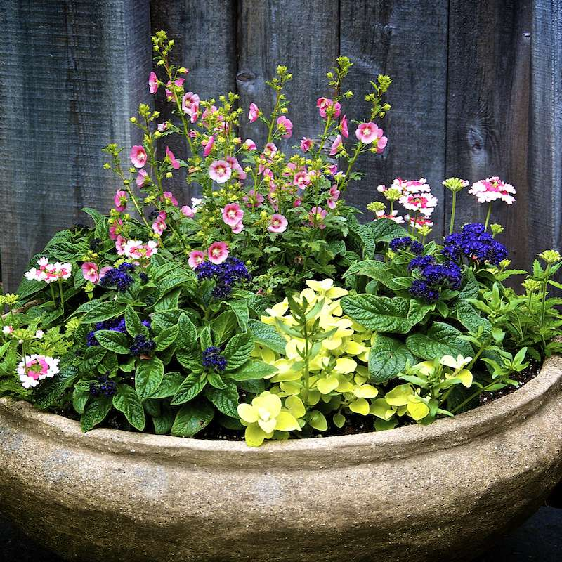 5 pro tips for healthy beautiful container gardens an organic looking large wide relatively shallow pot at asticou gardens maine workwithnaturefo