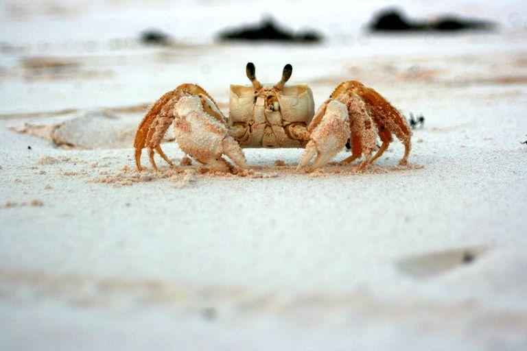 Crab Printables