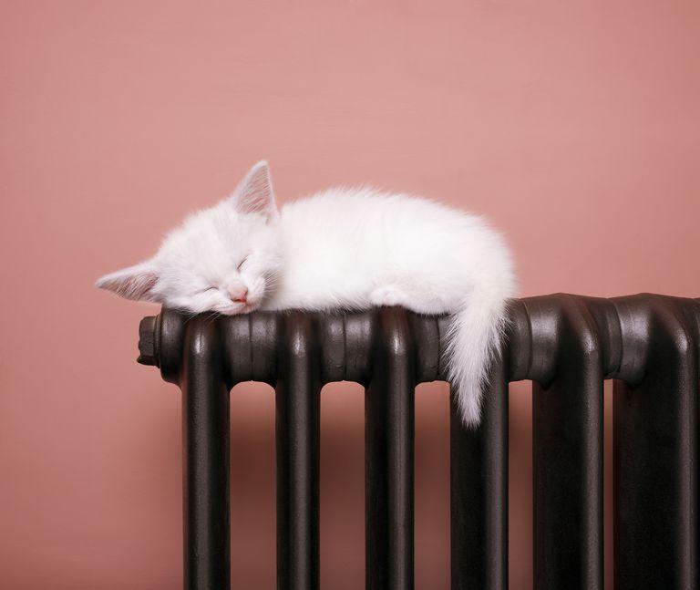 Kitten on heater