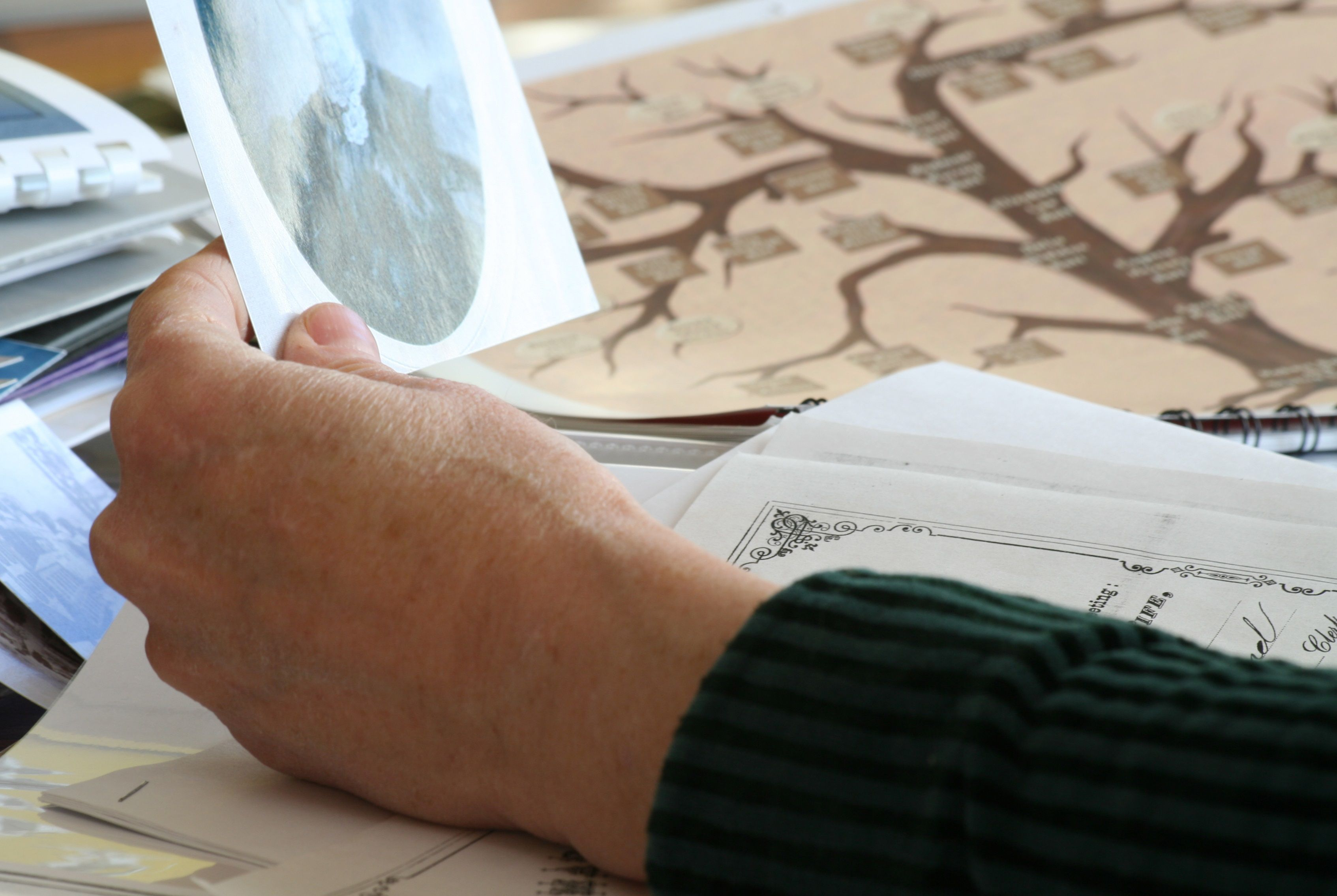 design layout printing for a family tree book