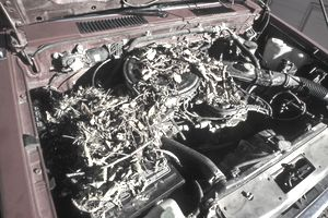Rats Nested In Car Engine