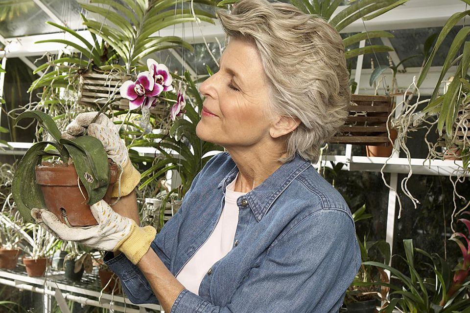 Mature woman holding orchid in greenhouse