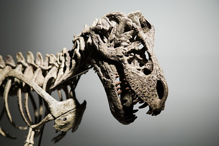 Carbon-14 dating can tell you how old this dinosaur skull is.
