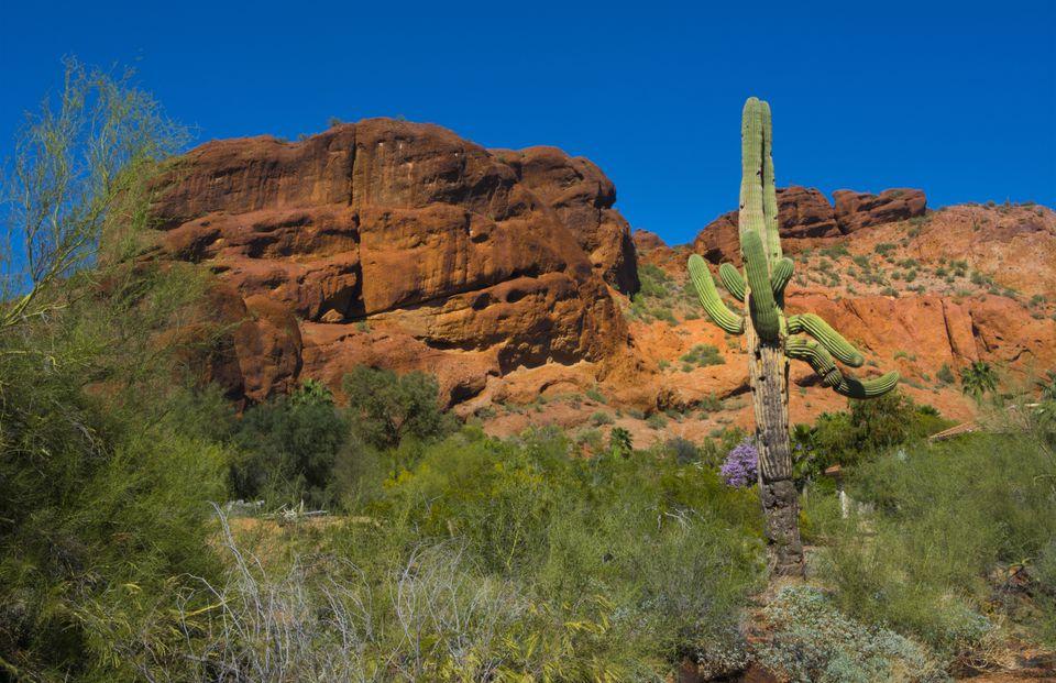 View of famous Camelback Mountain with cactus, Phoenix, Arizona, USA