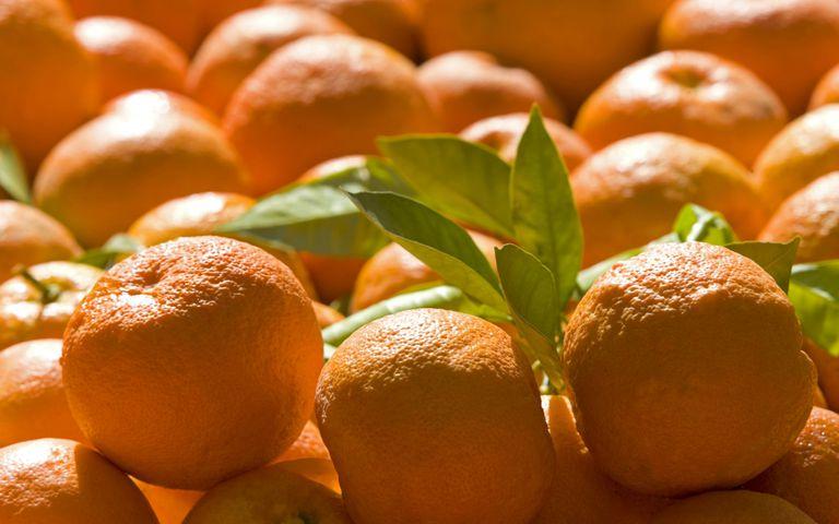 Seville oranges, a.k.a. bitter orange