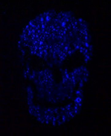 This glowing skull was made by sponging laundry detergent over a stencil.