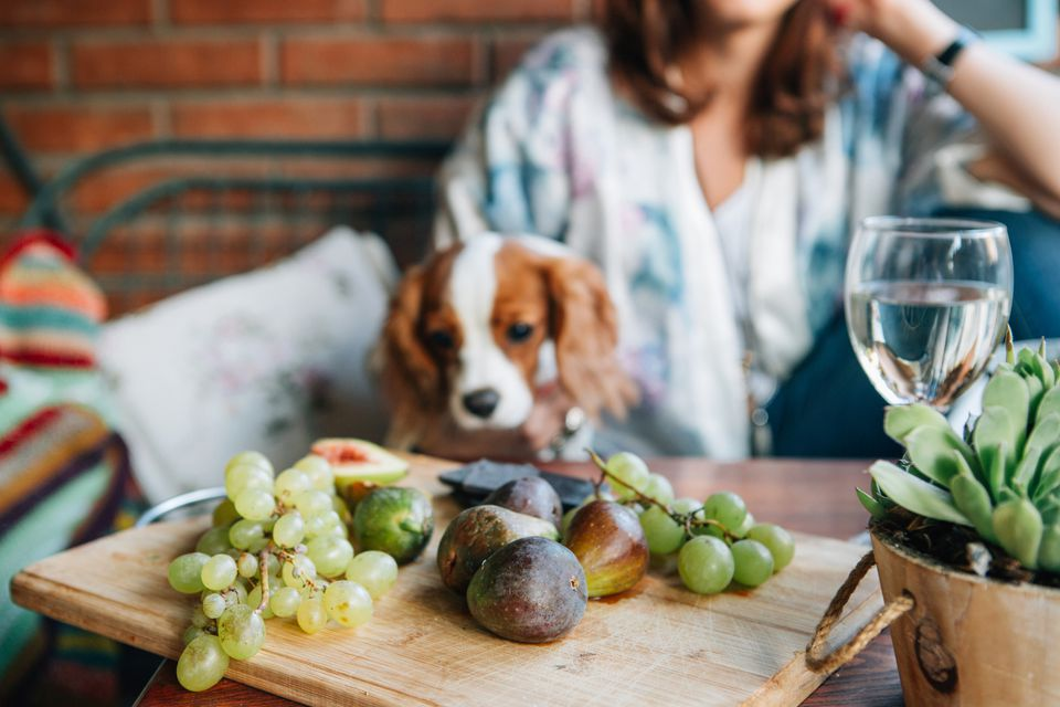 Dog staring at grapes and figs
