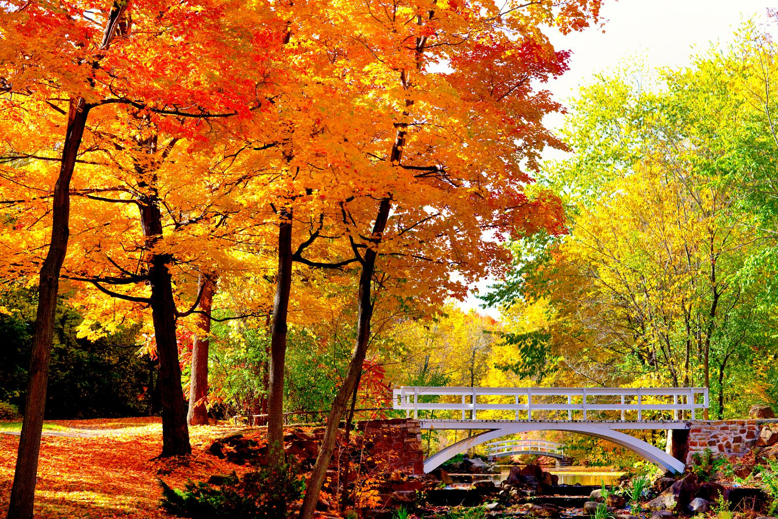9 Montreal Fall Foliage Destinations You Have To See