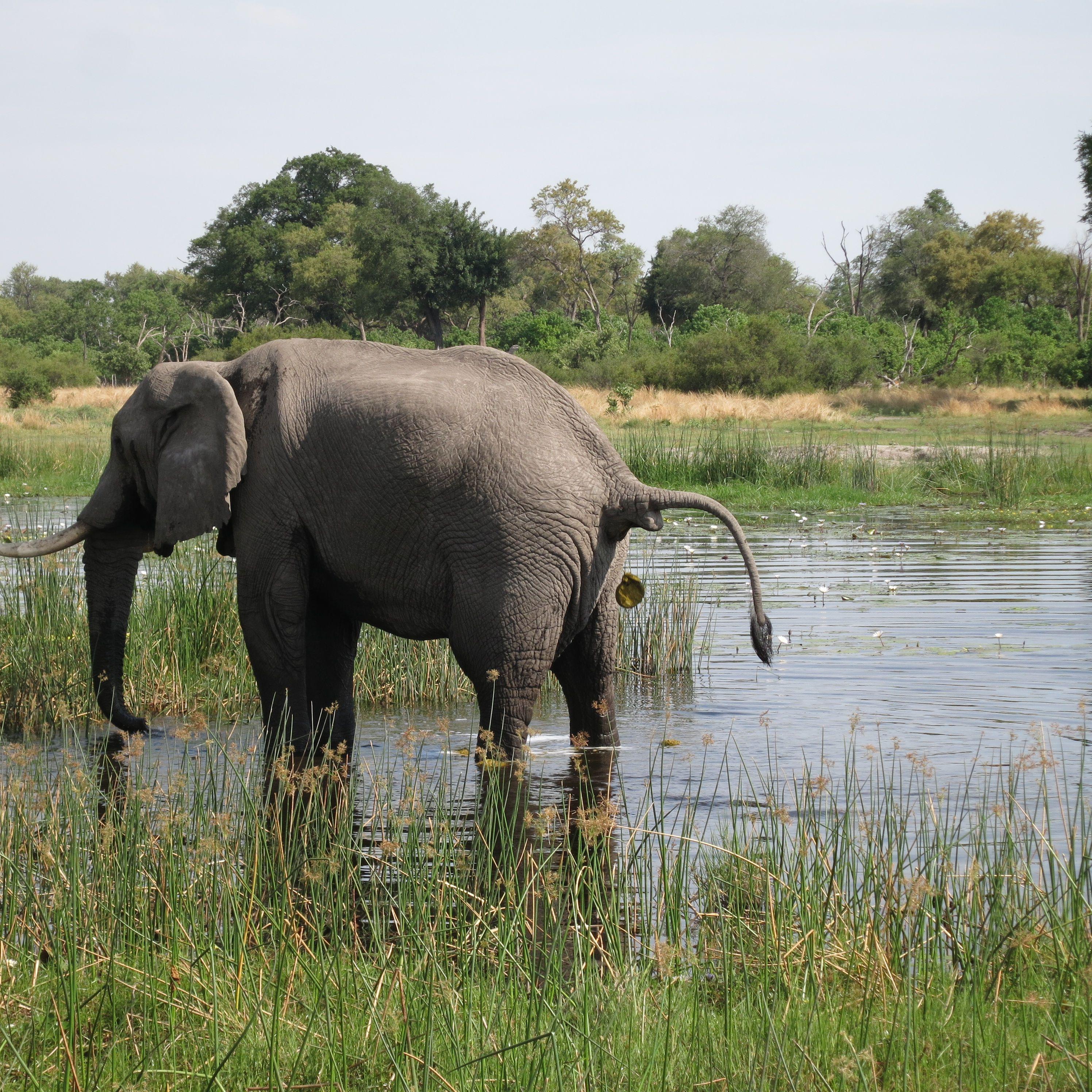 an introduction to africa u0027s big five safari animals
