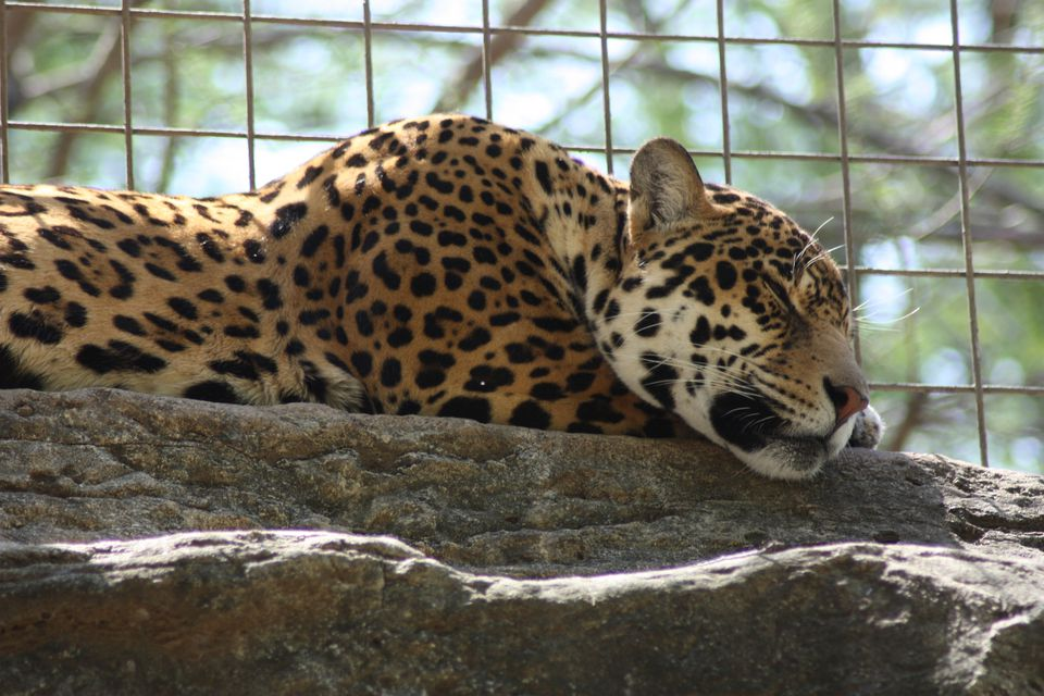Visitor Guides to Zoos Around Texas
