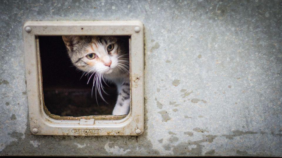 The 7 Best Cat Doors To Buy In 2018