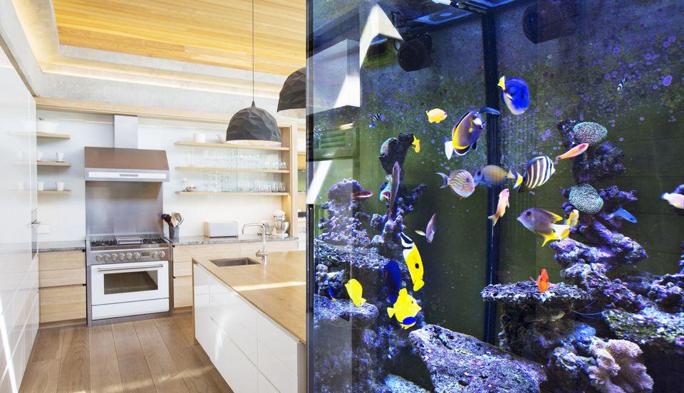 Tropical fish swimming in aquarium outside kitchen