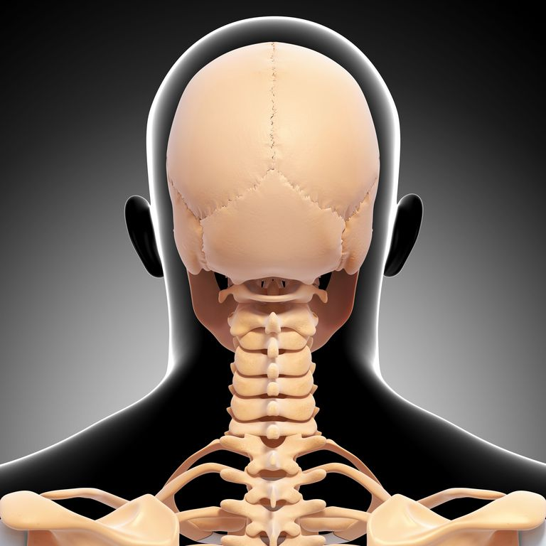 Cervical spine, including the atlanto axial joint at the top of the neck.