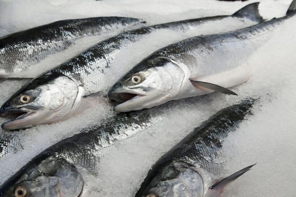 Wild sockeye salmon displayed for sale in ice
