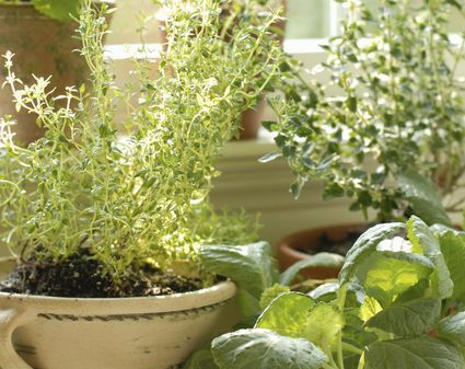 Best Filler Plants To Grow In Containers