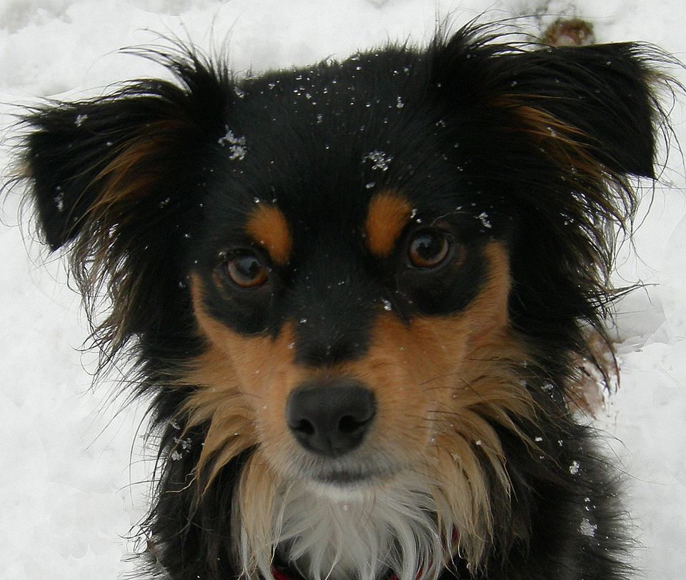 Pictures Of Mixed Breed Dog Cute Mutt Photos