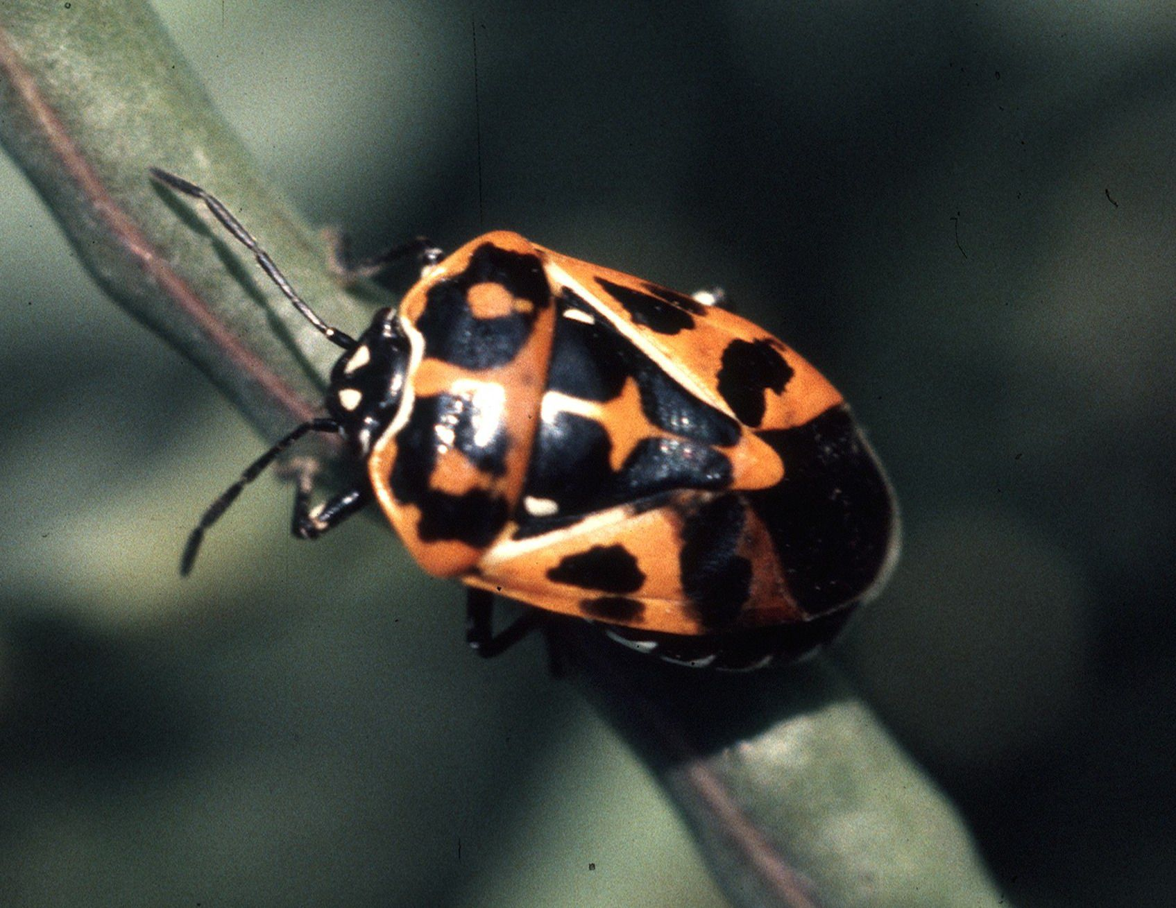 10 fascinating facts about stink bugs