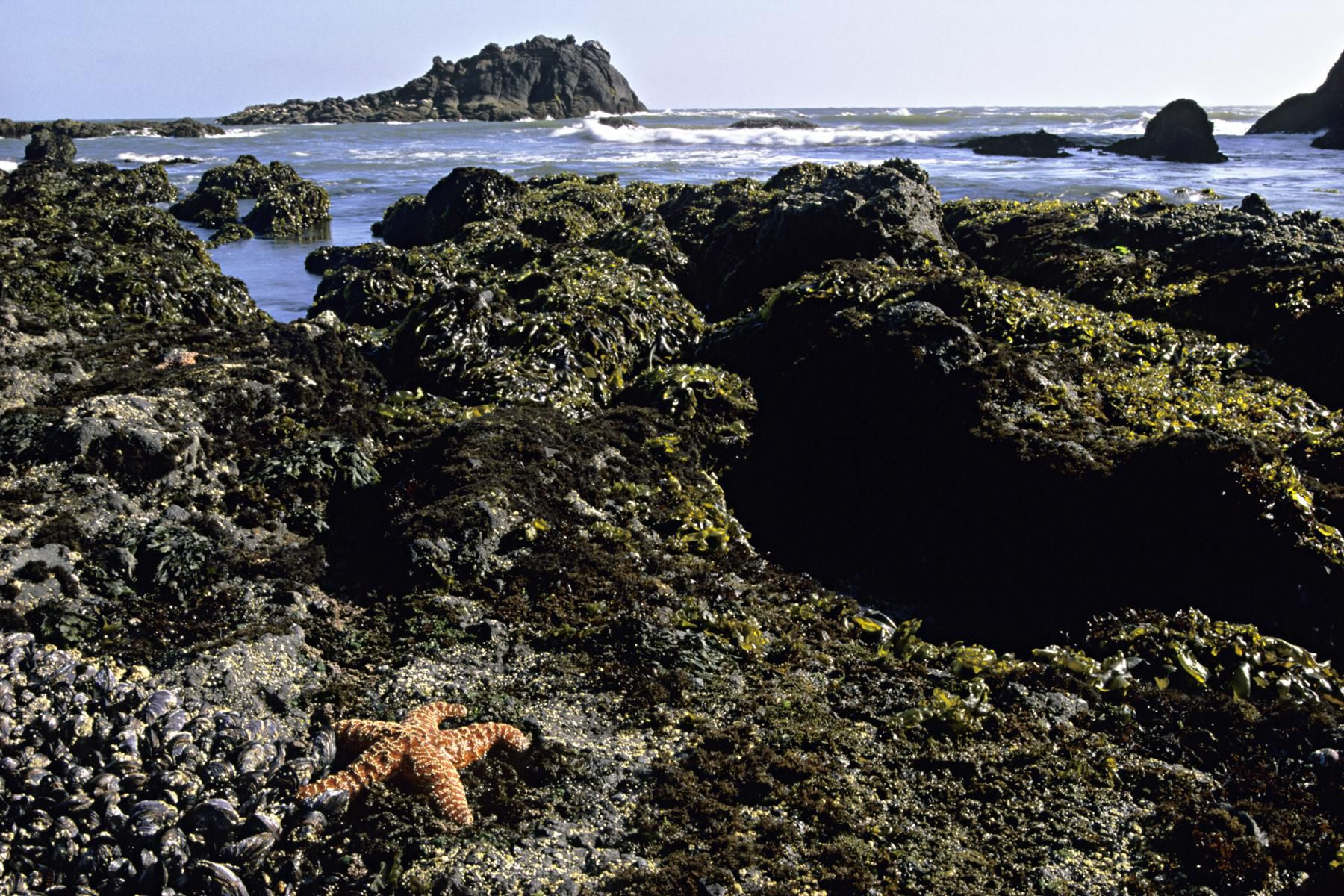 intertidal organisms Intertidal ecology is the study of intertidal ecosystems, where organisms live between the low and high tide lines at low tide, the intertidal is exposed whereas at.
