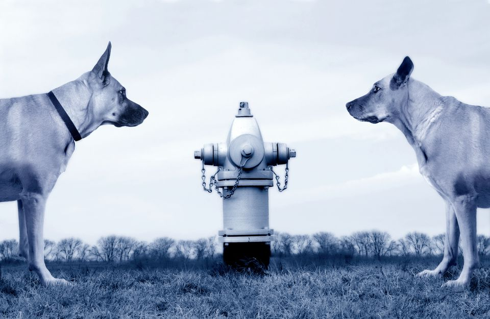Two dogs looking at each other near fire hydrant