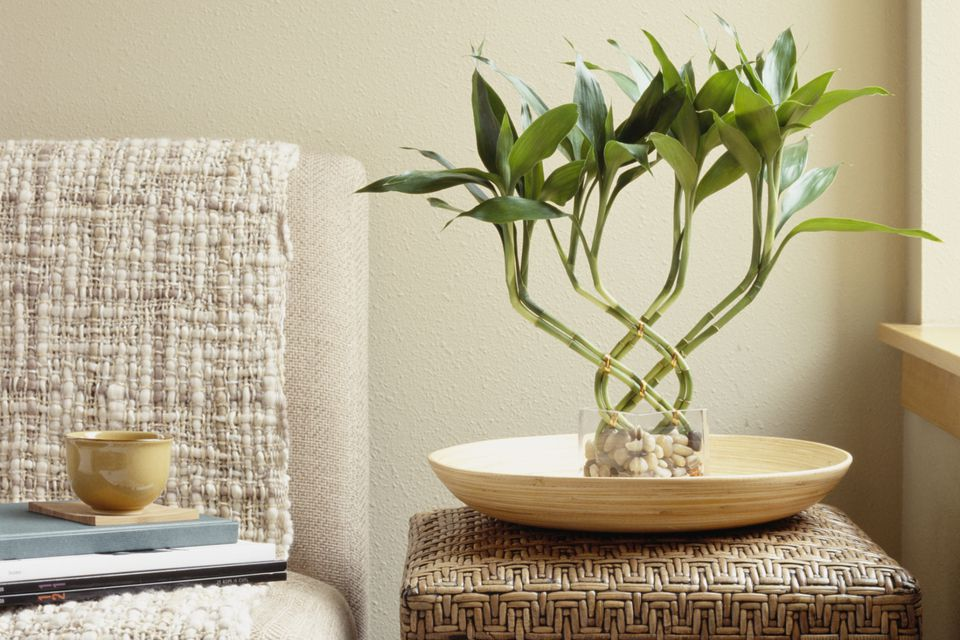 Bamboo plant on table next to sofa