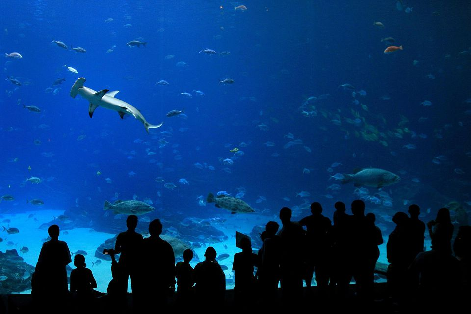 People look at a hammerhead shark while visiting the Georgia Aquarium on April 2, 2007 in Atlanta, Georgia. The aquarium has been open since 2004 and is home to an estimated 55,000 fish.