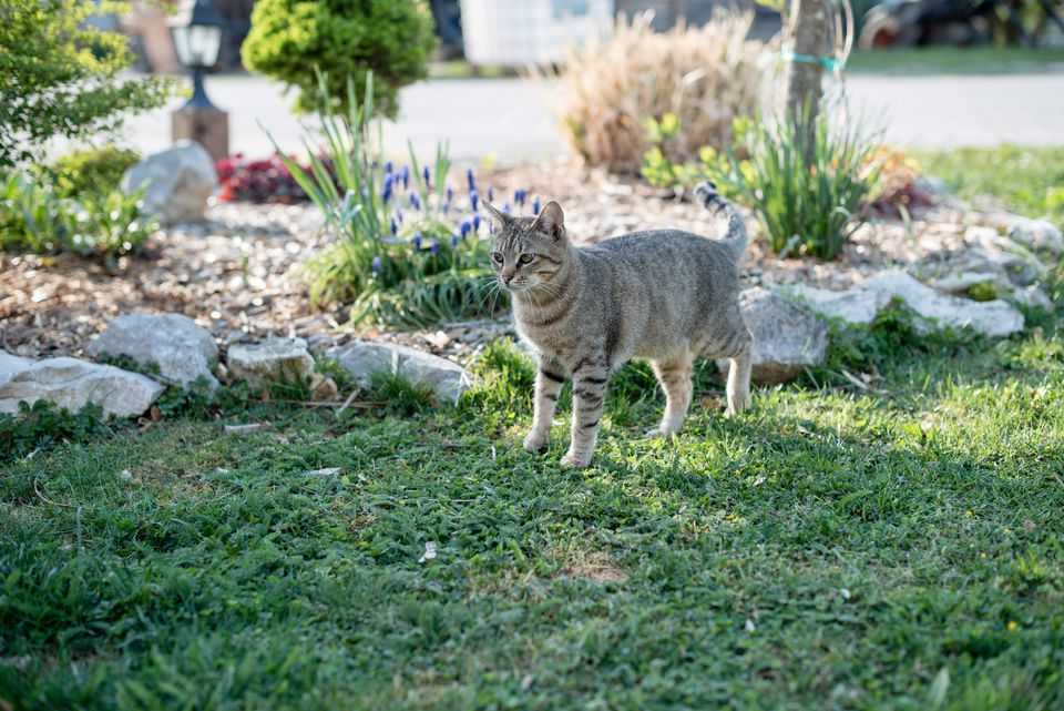 Young cat(s) exploring the yard