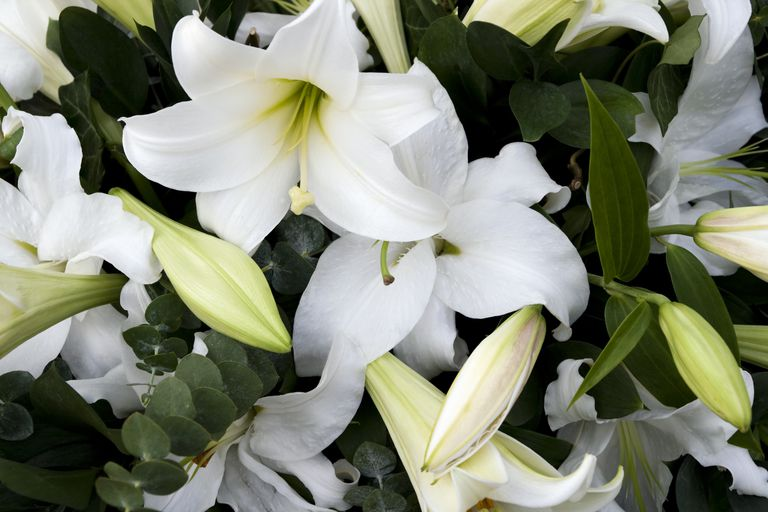 Mourning lilies