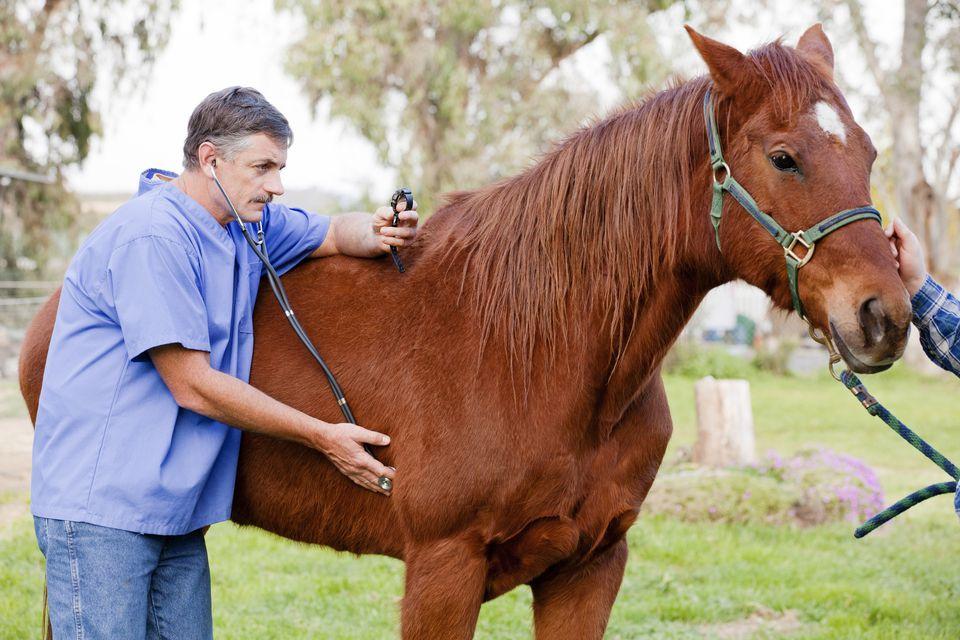 Veterinarian examining the horse