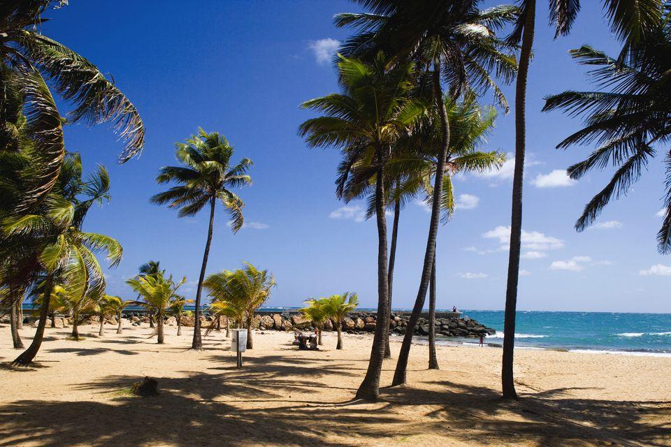 Palm Trees on Condado Beach in San Juan