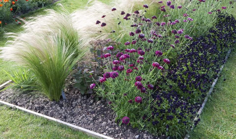 12 ornamental grasses that will stop traffic for Tall border grass