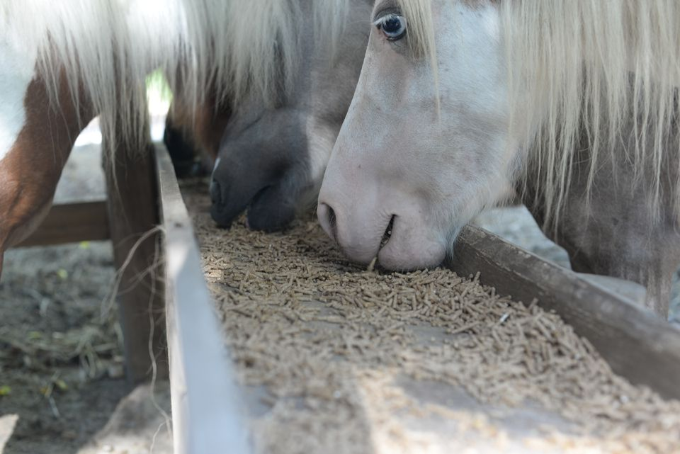 Horses Eating Food In Stable
