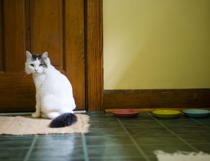 Why Cats Don T Always Cover Their Poop