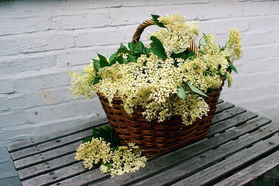 Elderflowers
