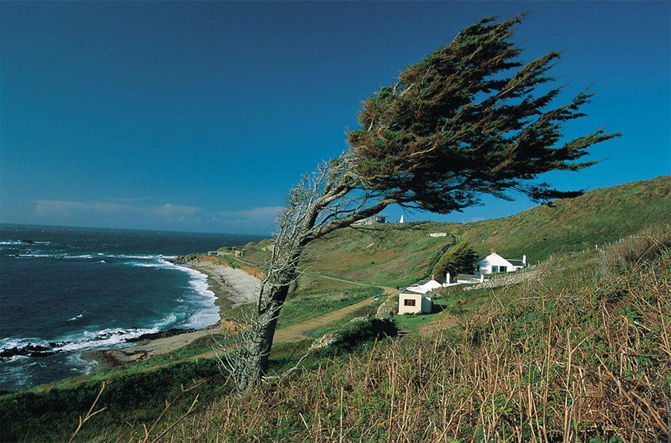 Windswept Alderney