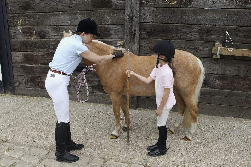 A woman and a girl measuring height of pony using measuring stick against withers
