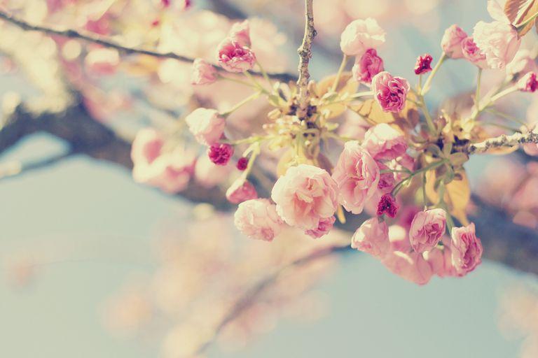 Spring - primavera