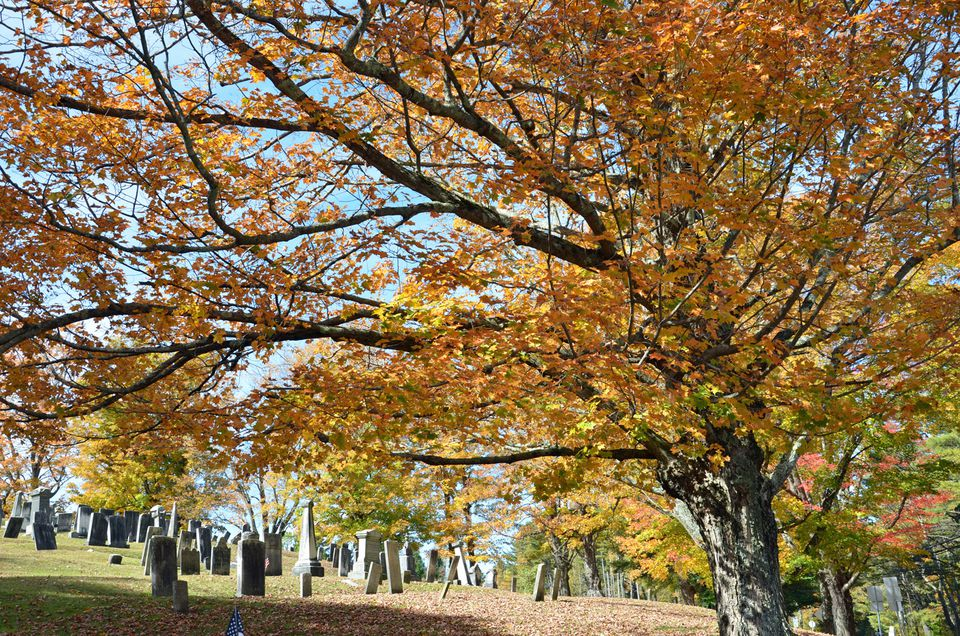 Maudslay State Park In Fall